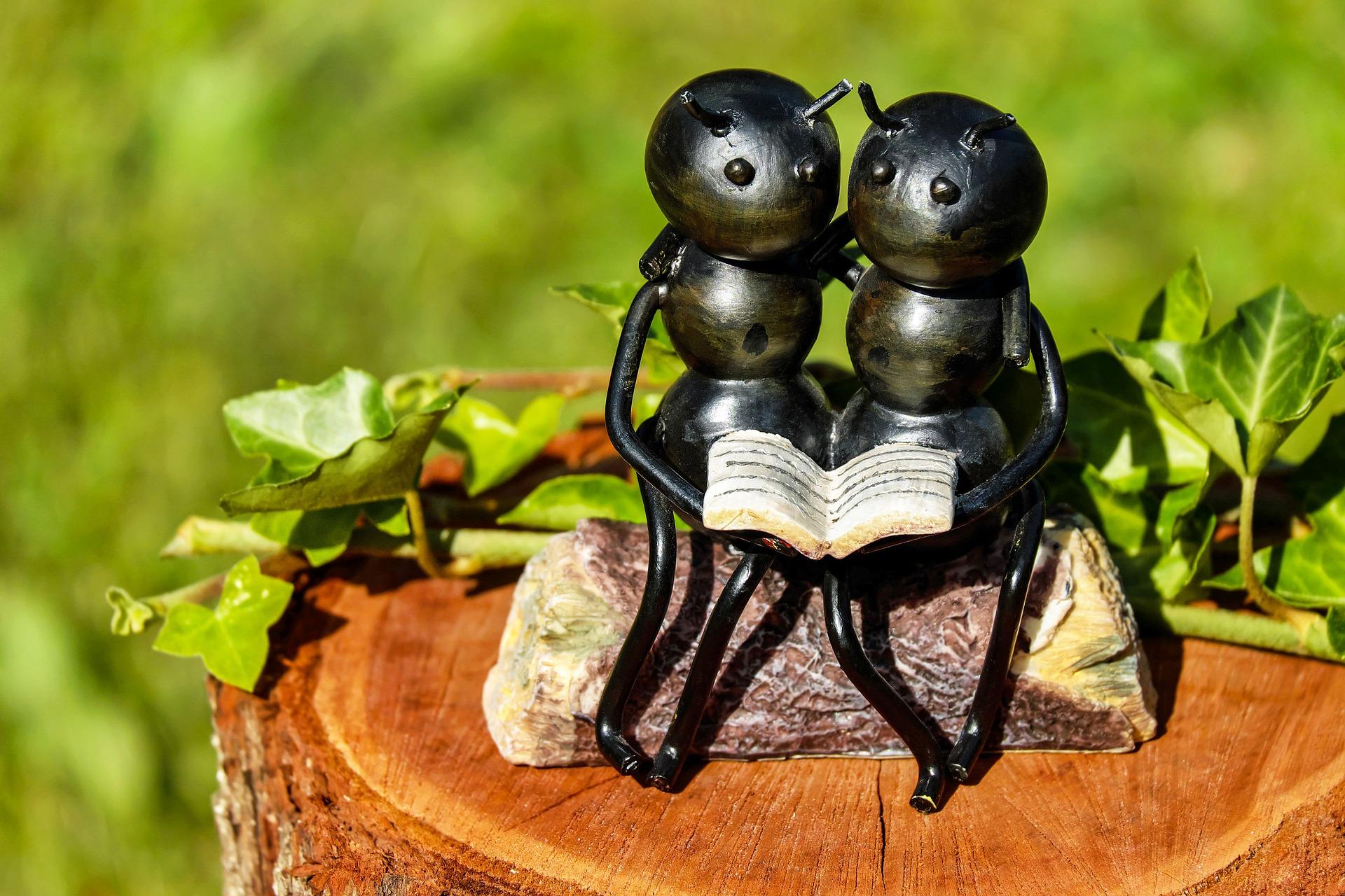 アリの夫婦